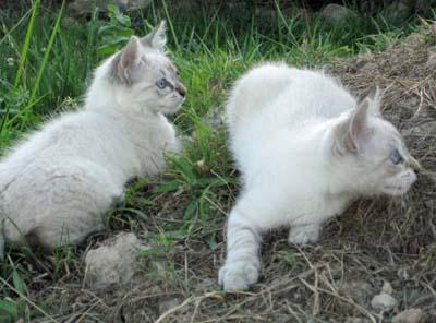 Kittens_edited-2