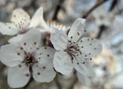 Blossom_edited-1